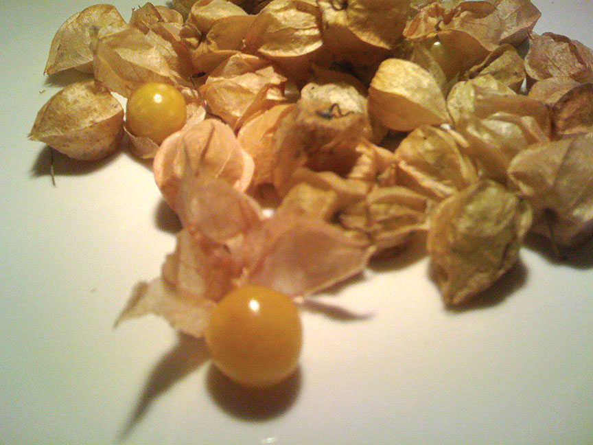 ground cherries